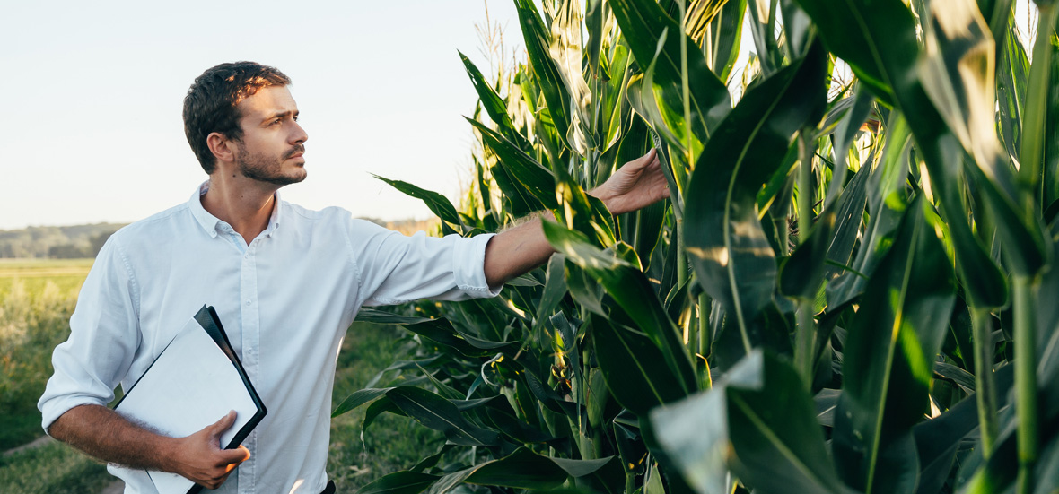 Redirection - Alimentos e agronegócios